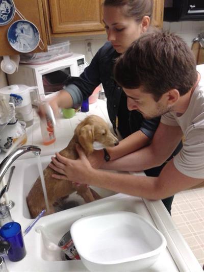 Giving Charlie Dog a bath